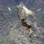 Spider, Reunion 2010