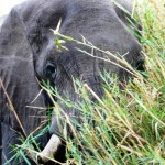 Zimbabwe, 2006