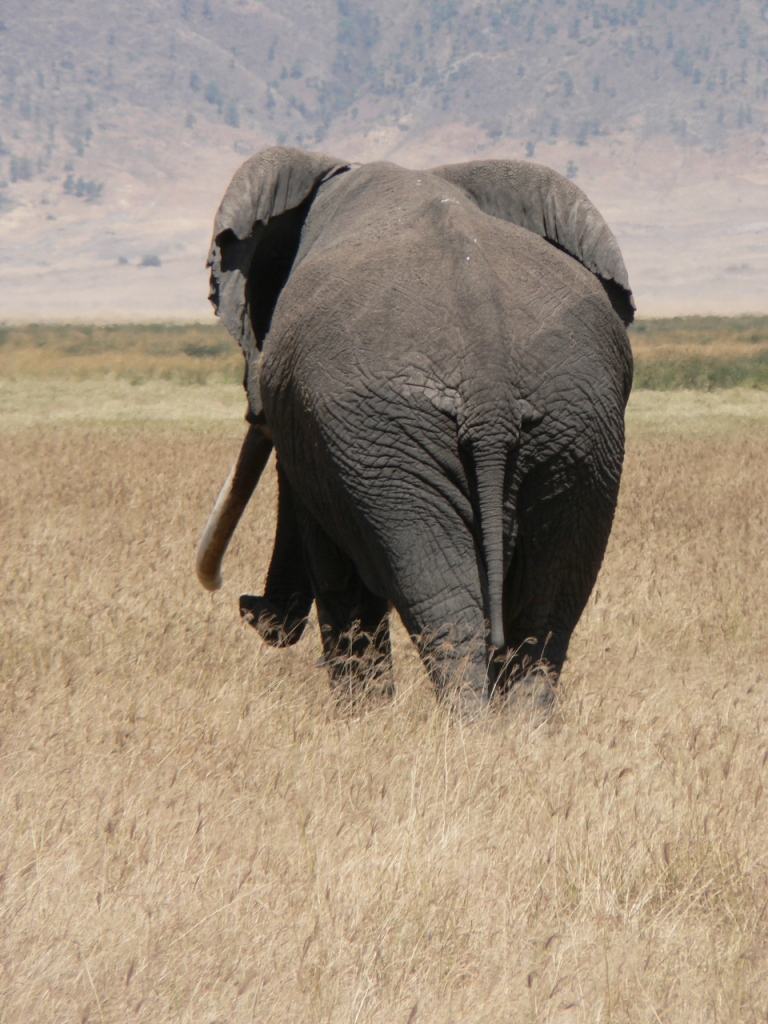 Old Elephant, NgoroNgoro 2006