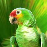 Costa Rica, 2006